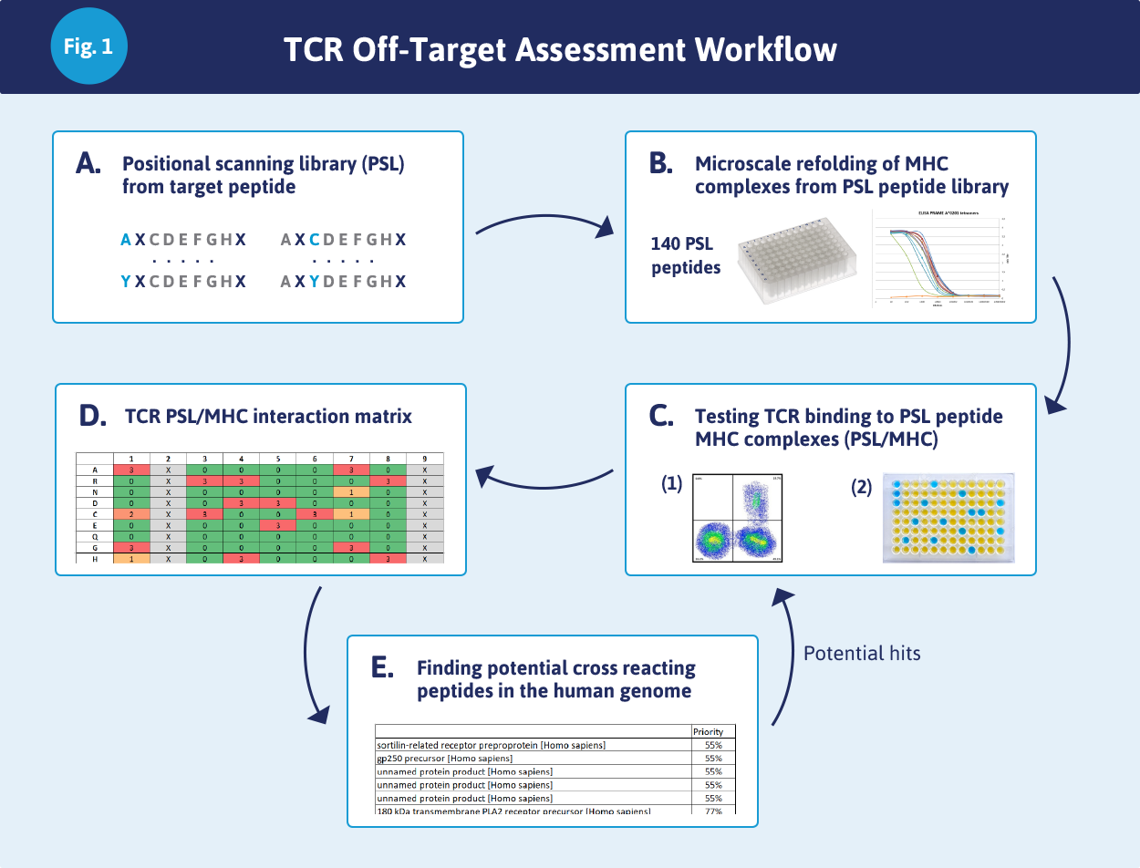TCT Off-Target Assessment Workflow – Immunitrack